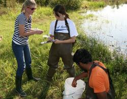 Wetlands field trip